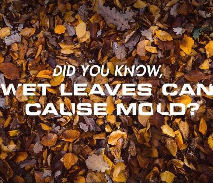 Mold Remediation Clean Up Your Leaves!